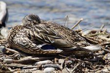 Free Animal, Avian, Bird Royalty Free Stock Photos - 109890788