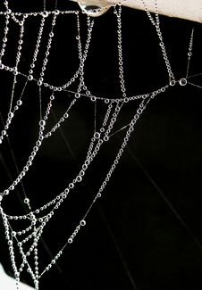 Free Cobweb, Dew, Spider Stock Photo - 109891010