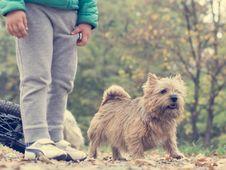 Free Animal, Autumn, Boy Royalty Free Stock Photography - 109891157