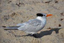 Free Animal, Avian, Beak Royalty Free Stock Photos - 109891388