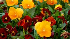 Free Beautiful, Flowers, Bloom Stock Photography - 109891442