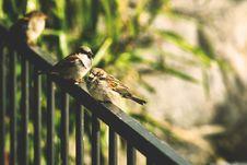 Free Animal, Avian, Bird Stock Photography - 109891562
