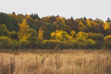 Free Autumn, Colours, Forest Royalty Free Stock Photos - 109891798