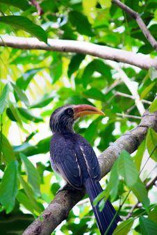 Free Animal, Asia, Avian Stock Photography - 109892152