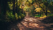 Free Trees In Forest Stock Image - 109892801
