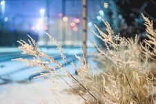 Free Close-up Of Frozen Plants At Night Stock Photo - 109892930