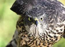 Free Close-up Of Eagle Stock Photos - 109893003