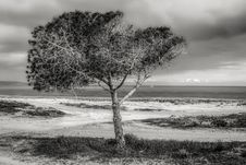 Free Tree On Beach Against Sky Stock Photography - 109893052