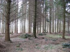 Free Conifers, Environment, Fir Royalty Free Stock Photos - 109893158