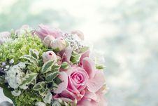 Free Beautiful, Beauty, Blooming Royalty Free Stock Image - 109893766