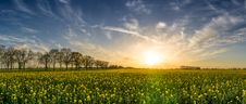 Free Agriculture, Bloom, Blossom Stock Photo - 109893770