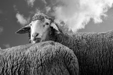 Free Agriculture, Animal, Black-and-white Stock Photos - 109893863