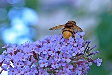 Free Animal, Bee, Bloom Royalty Free Stock Image - 109894186
