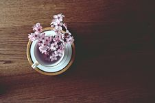 Free Beautiful, Bloom, Blooming Stock Images - 109894604