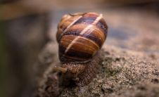 Free Depth Of Field Photography Of Snail Stock Image - 109895571