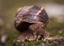 Free Shallow Focus Photography Of Snail Royalty Free Stock Photos - 109895838