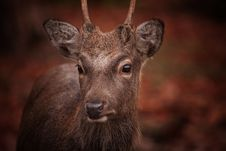 Free Animal, Photography, Antler Royalty Free Stock Photos - 109896058
