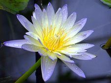 Free Aquatic, Plant, Beautiful Stock Image - 109896121