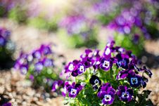 Free Beautiful, Bloom, Blooming Royalty Free Stock Images - 109896339