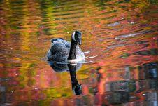 Free Animal, Beak, Duck Stock Photo - 109896620
