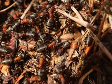 Free Animal, Ants, Blur Stock Images - 109896744