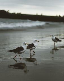 Free Animal, Animals, Avian Stock Images - 109897294