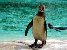 Free Animals, Birds, Mammal Royalty Free Stock Photos - 109897548