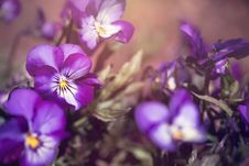 Free Beautiful, Bloom, Blooming Royalty Free Stock Photography - 109898317