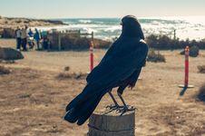 Free Animal, Avian, Beach Royalty Free Stock Image - 109898326