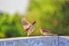 Free Selective Focus Of Two Birds On Concrete Beam Royalty Free Stock Photos - 109898448