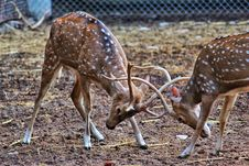 Free Animals, Antler, Buck Stock Images - 109898614