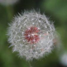 Free Beautiful, Bloom, Blooming Stock Image - 109898891