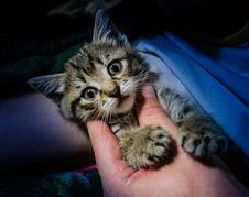 Free Adorable, Animal, Photography Stock Photos - 109899043