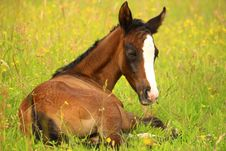 Free Agriculture, Animal, Equine Stock Photo - 109899290