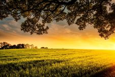 Free Agriculture, Clouds, Cropland Royalty Free Stock Image - 109899526
