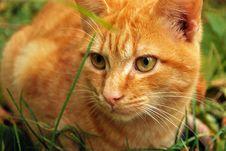 Free Adorable, Animal, Blur Royalty Free Stock Image - 109899586