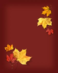 Free Autumn Feelings Background Royalty Free Stock Photo - 10995155