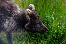 Free Animal, Photography, Blur Stock Photography - 109900152