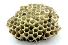 Free Bee, Beehive, Hive Royalty Free Stock Photos - 109900348