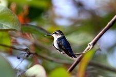 Free Animal, Avian, Beak Royalty Free Stock Image - 109900896