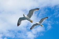 Free Air, Animal, Portrait Royalty Free Stock Image - 109900936