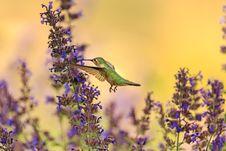 Free Bird, Bloom, Blooming Royalty Free Stock Photos - 109901268