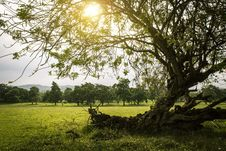 Free Backlight, Branches, Countryside Royalty Free Stock Images - 109901349