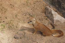 Free Animal, Conservation, Daylight Royalty Free Stock Photography - 109901367