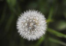 Free Beautiful, Bloom, Blossom Stock Image - 109901421