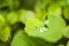Free Close-up, Dew, Dewdrop Royalty Free Stock Photos - 109902278