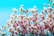 Free Bloom, Blooming, Blossom Stock Photo - 109902580