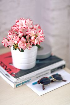 Free Azalea In A White Pot Royalty Free Stock Image - 109903176