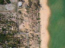 Free Aerial Photography Of Seashore With Coconut Trees Stock Image - 109903421