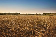Free Agriculture, Cropland, Crops Stock Images - 109903844